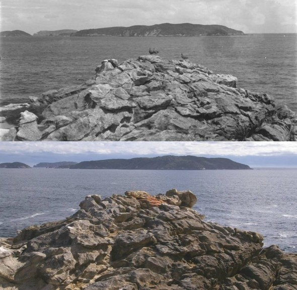 Putauhinu Island viewed from the southwest point of Solomon Island in 1931 (above, image by Edgar Stead, Canterbury Museum 2010.75.148) and 2012 (below, image by Colin Miskelly, Te Papa). The third skua in Stead's image was standing on a rock slab that has since tipped over, changing the profile of the rock outcrop.