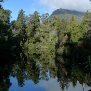 Forest reflected in the beautifully still waters of the Lake Ellery outlet to the Jackson River, south of Haast. Photo Leon Perrie. © Te Papa.