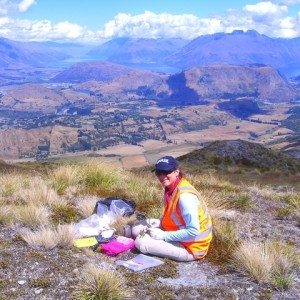 Here I am collecting Myosotis on a beautiful day on Coronet Peak, Otago, South Island.