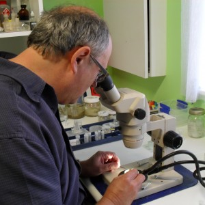 Dr Graham Bird at work in his laboratory, examining tanaids under a microscope (© Graham Bird)