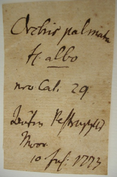 This is a label from the oldest specimen in the collection. This label was written c. 240 years ago.
