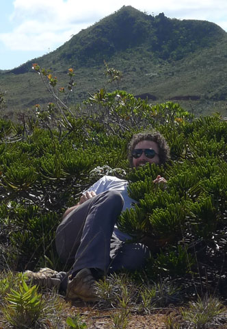 Juan embracing the Lilliputian conifer 'trees' of the maquis vegetation. These are Neocallitropsis pancheri, at Montagne Des Sources. Photo Leon Perrie. © Te Papa.