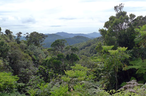Mountainous (sub-?) tropical rainforest abounds in some parts. This is Aoupinie. Photo Leon Perrie. © Te Papa.