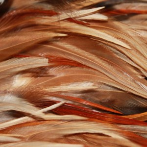 Close up of cloak,chicken hackle feathers. Image courtesy of the New Zealand Embassy, Beijing.