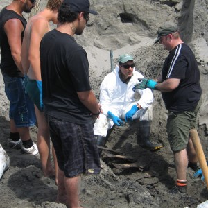 Anton van Helden Te Papa's Marine Mammal Collection Manager with DOC staff and local iwi uncovering the adult female Spade-tooth whale skeleton. Copyright Te Papa