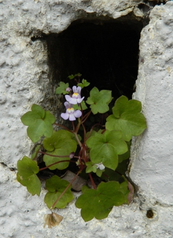 Epuni Street / My first flat was here. / This is so Epuni Street for me, / this dear, bright, hopeful flower / at the mouth / of a dark damp cave.  Image © to and courtesy of jMj.