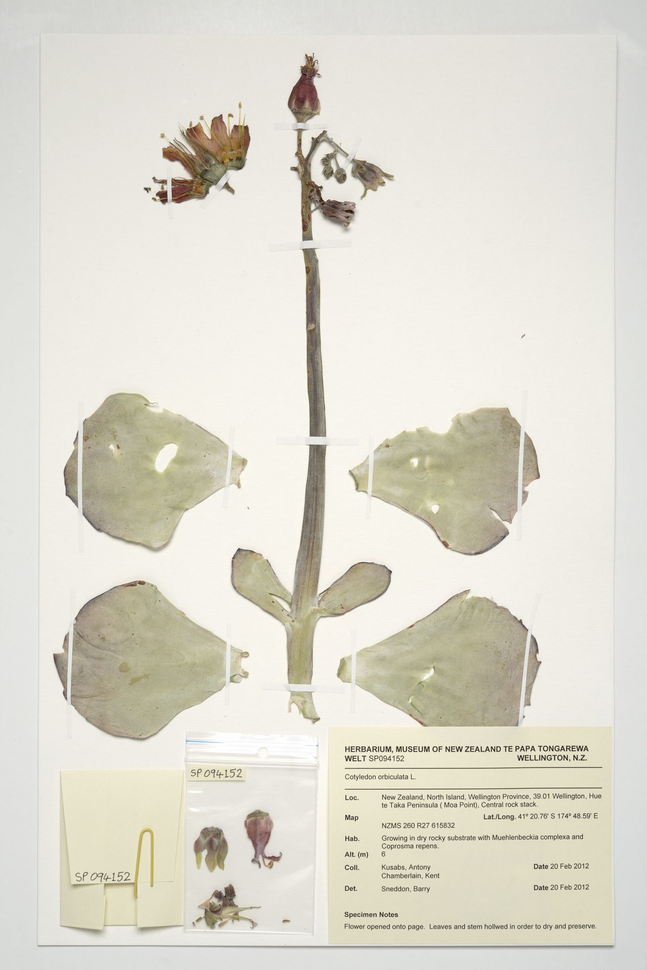 How to make a herbarium with your own hands Herbarium in biology. Herbarium of leaves 61