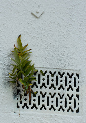 I love the way plants grow / all over the place. / Weeds, I read once, / are 'plants out of place'. / But, who's to say? / Who's to say?  Image © to and courtesy of jMj.