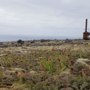 Aceanas and rusty relics at Crozet Islands. Image: Susan Waugh, © Te Papa