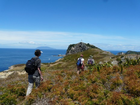Fig. 1. Team members Jo Peace, Megan Friesen and Derek Bettesworth head towards the Burgess Island lighthouse. Little Barrier Island Hauturu can be seen in the background. Photo Alan Tennyson, Te Papa