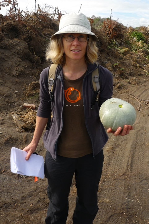 Pumpkin had also self-established next to the Koitiata garden-discard site. Several fruit were harvested, albeit for nutrition rather than science. Photo © Leon Perrie.