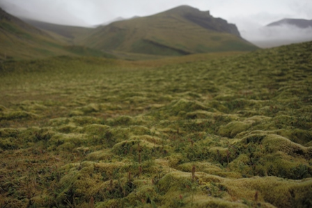 Moss forming ridges across a low hill at Pointe Basse. Photo: Susan Waugh, Courtesy of Susan Waugh.