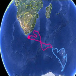 Wandering Albatross Diomedea exulans tracks from Crozet Islands, tracked during our study in the incubation period, March 2013. The pink track is a female, the blue a male.
