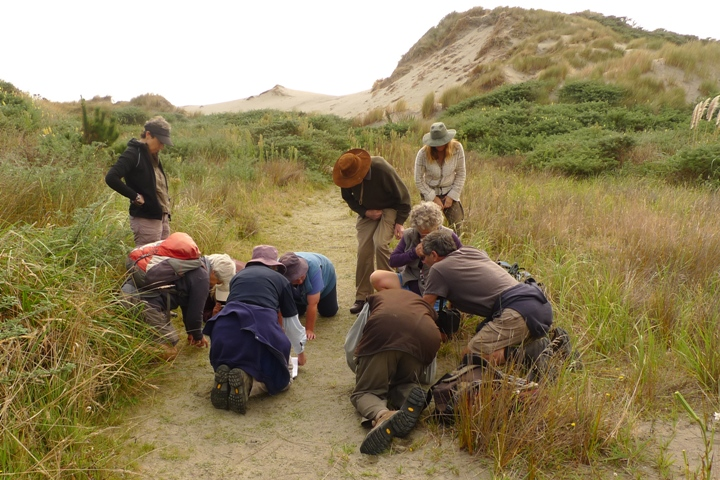 A huddle of prostrate people peering intently at the ground; can only mean a botanical society has fixated on some small plant. Photo © Leon Perrie.
