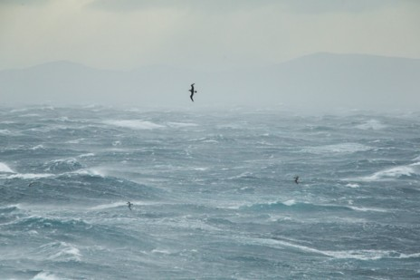 Albatross at home on rough seas. Photo credit: Michael Hall © Museum of New Zealand Te Papa Tongarewa