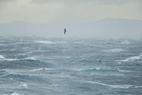 Albatross at home on rough seas. Photo credit: Michael Hall © Museum of New Zealand Te Papa Tongarewa