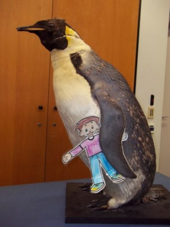 Flat Stanley and an emperor penguin in Te Papa's classroom. Photographer: Scott Ogilvie © Te Papa