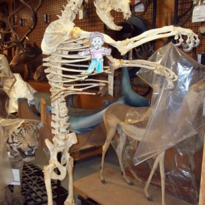 Flat Stanley and a bear skeleton in Te Papa's vertebrate's collection. Photographer: Scott Ogilvie © Te Papa