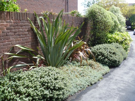 Flaxes (Phormium tenax), hebes and kohukohu in a suburban garden in Bristol, UK. Photo credit: Lara Shepherd.