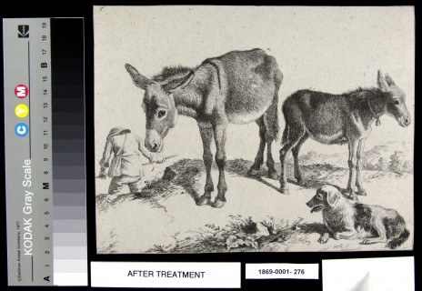 After treatment. 1869-0001-276 Untitled (Donkeys, dog and man) by Francesco Londonio, circa mid 17th century. Etching on grey laid paper with applied pigments. Photo by Liisi Hakala © Te Papa.