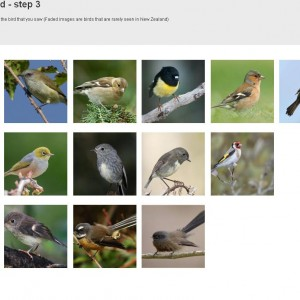 NZ Birds Online screenshot - Tiny forest birds