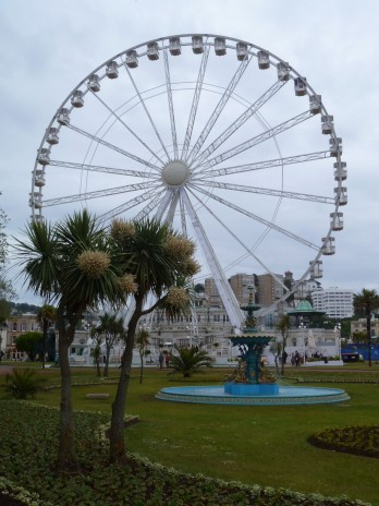 Torquay palm (cabbage tree; Cordyline australis) in front of the Torquay Big Wheel, which was previously a feature of the 2012 London Olympics. The cabbage trees were flowering profusely when I visited in June. Photo credit: Lara Shepherd.
