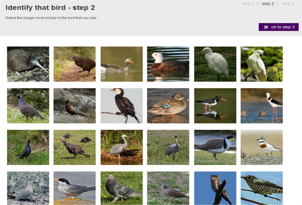 'Identify that bird' screenshot from New Zealand Birds Online
