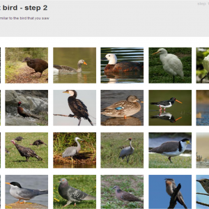 Identify-that-bird screenshot