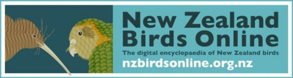 New Zealand Birds Online logo