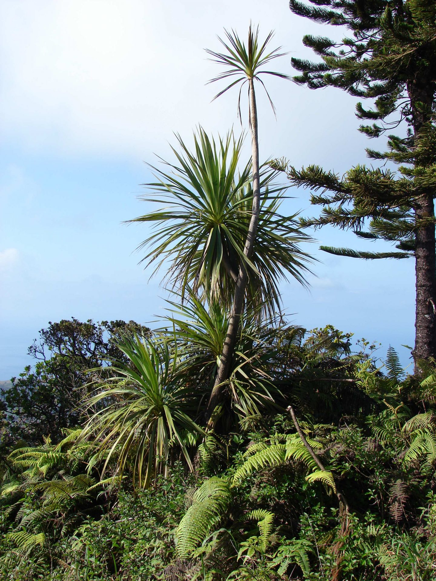 New Zealand Plants Abroad Part 2 The Troublemakers Te Papa S Blog
