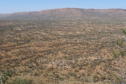 Mulga trees in the genus Acacia. These small trees are common through vast areas of the Australian interior. The outskirts of Alice Springs are in the top left of this photo. © Leon Perrie.