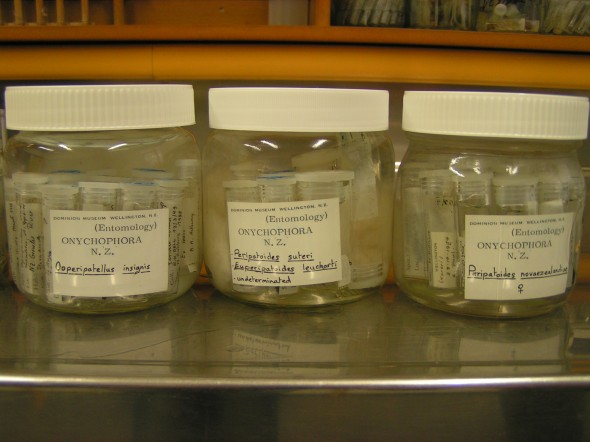 Onychophora specimens in tubes are stored in larger jars, with detailed labels to help store them in the right section of the wet collections. Photographer: Mathilde Meheut. © Te Papa