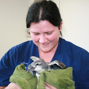Lisa Argilla, Veterinary Science Manager at Wellington Zoo. Photo © Wellington Zoo