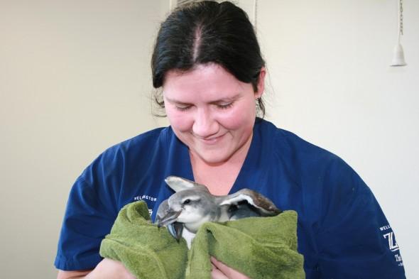 Lisa Argilla, Veterinary Science Manager at Wellington Zoo. Photo © Wellington Zoo