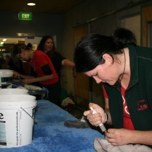 Production line for crop tubing Prions medication, food and fluids. Photo © Wellington Zoo