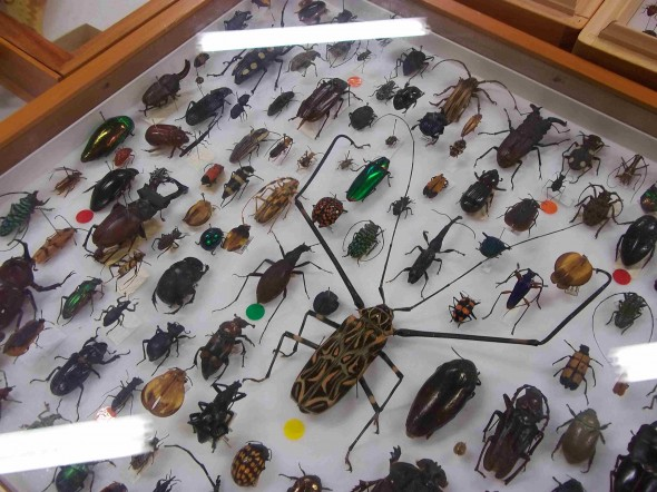 Exotic beetles from Te Papa's collection. Photographer: Scott Ogilvie © Te Papa