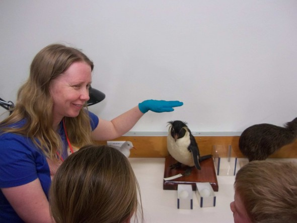 Researcher Sarah Jamieson and the 'rock star' rockhopper penguin. Photographer: Scott Ogilvie © Te Papa