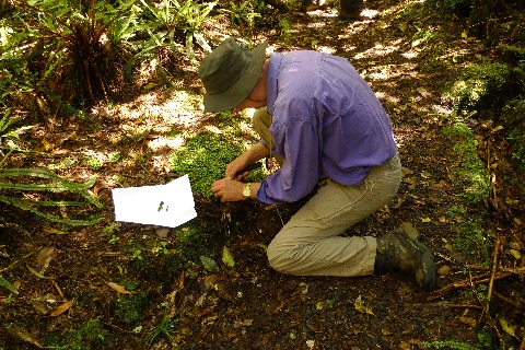 Te Papa Research Fellow Patrick Brownsey collecting a moss near National Park. The collected material is stored in an envelope folded from a sheet of A4 paper; each collection goes into a separate envelope. Photo Leon Perrie. © Te Papa.