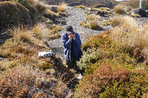 Te Papa Research Associate Peter Beveridge looking for liverworts on Mount Ruapehu. Peter is examining a collection using a magnifying hand-lens, an essential piece of equipment if working with these small plants. Photo Leon Perrie. © Te Papa.