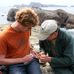 Alan Tennyson (left) and Colin Miskelly collecting a blood sample from a fulmar prion on Toru Islet, Western Chain, November 2013. Image: Antony Kusabs, Te Papa.