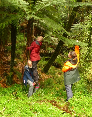 Institutional collaboration. Landcare Research's David Glenny gives me a lift to collect a frond from a Cyathea cunninghamii tree fern, with the Department of Conservation's Amy Hawcroft. Thanks to DOC's Eru Te Huia for the camera work.