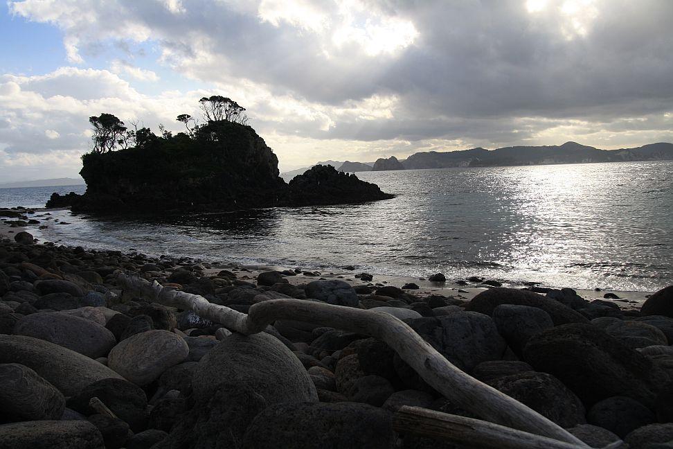 Flesh Footed Shearwater Surveys At Ohinau Island Coromandel Te