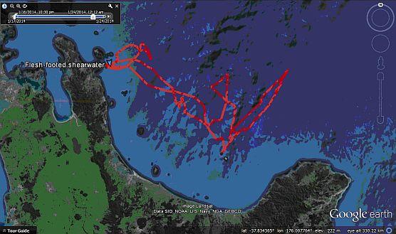 GPS track of FFSW