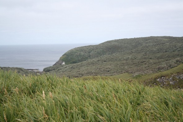 Overview of the preferred bryophyte habitat on the Snares - Catchments gullies sloping to the east on North East Island. Image: Antony Kusabs, Te Papa.