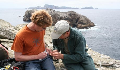 Alan Tennyson and Colin Miskelly studying fulmar prions. Toru Islet with main Snares Islands in background. 28 Nov 2013 Photographer Antony Kusabs, Te Papa