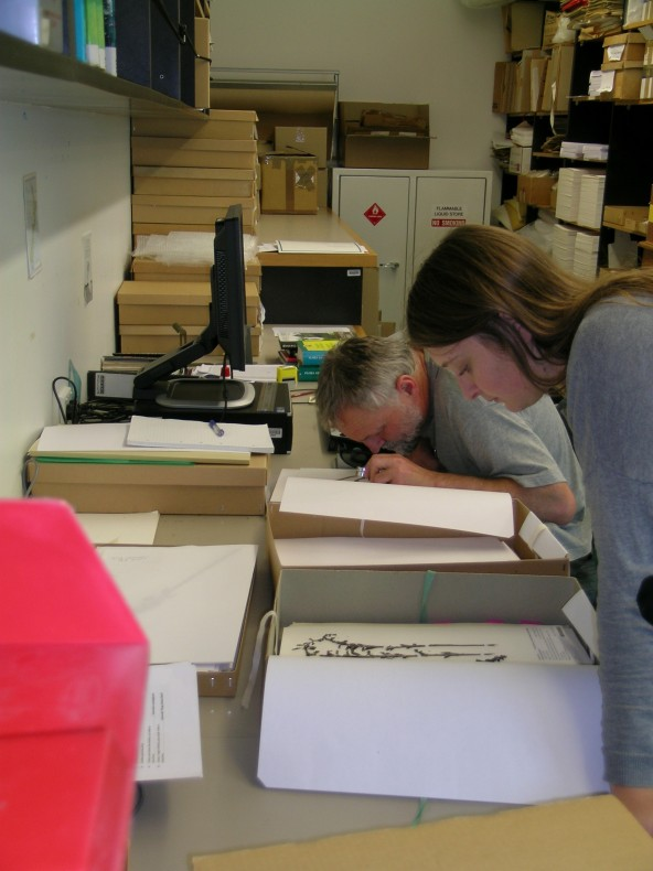 Jasine and Jeremy studying specimens of Gastrodia in the herbarium at Te Papa