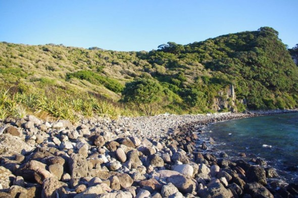 Boulder beach on Ohinau Island - habitat for shore skinks and Suter's skinks. Image: Colin Miskelly, Te Papa
