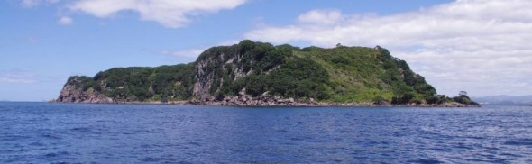 Ohinau Island viewed from the north. Image: Colin Miskelly, Te Papa