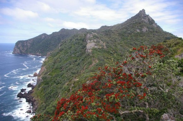 The summit ridge of Taranga, viewed from near the western end of the island. Image: Colin Miskelly, Te Papa