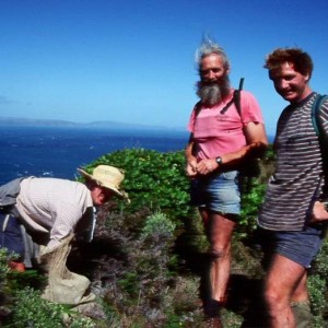 Tony Whitaker (centre) with Department of Conservation staff Ian Cooksley and Mark Townsend during a 'pre-rat-eradication' lizard survey on Kapiti Island, May 1995. Image: Colin Miskelly